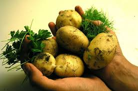 Several different types of Carbohydrate are in Potatoes